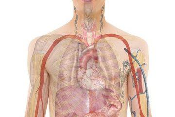 Comment fonctionne le foie dans le système digestif ?