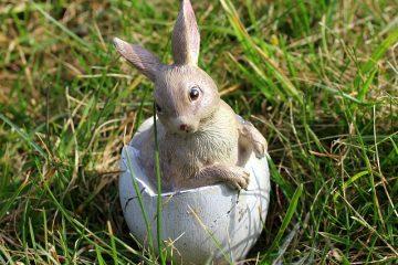 Quelle est la durée de vie d'un lapin domestique ?