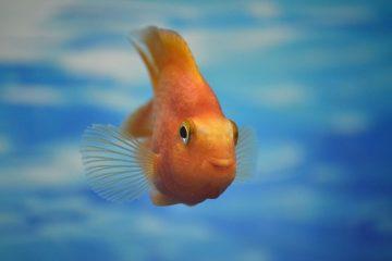Comment mettre fin à l'intimidation des poissons