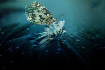 Butterfly Flower Centerpiece Idées de centre de table pour les mariages
