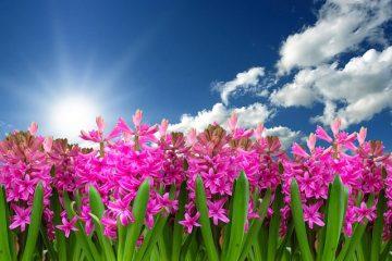 Fleurs pour le deuil