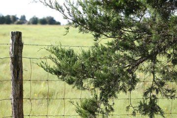Comment utiliser des clous ou des agrafes sur les clôtures en cèdre