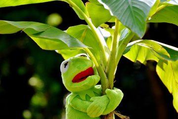 Comment conserver les feuilles de bananier