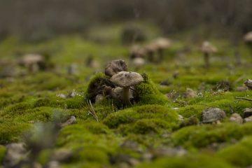 Traitement des pelouses pour les mousses