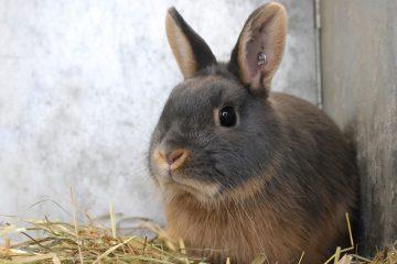 Comment tuer des lapins dans la cour