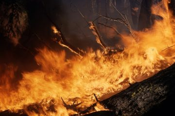 Quand un feu sauvage n'est-il plus contagieux ?