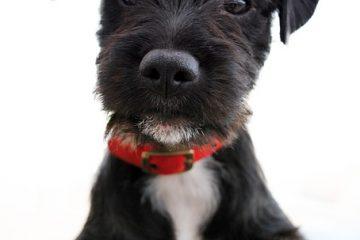 Comment rendre les pattes d'un chien plus odorantes