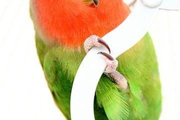 Comment garder la cage d'une perruche au chaud
