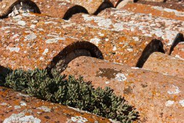 Comment enlever le lichen des bardeaux de toiture