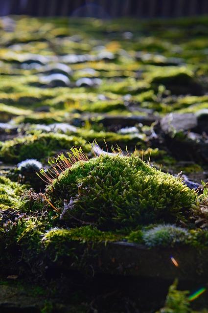 comment eliminer la mousse free antimousses ml lichens et mousses des troncs darbres with. Black Bedroom Furniture Sets. Home Design Ideas