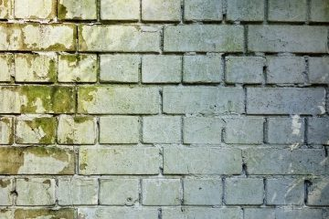 Traitements qui préviennent la moisissure sur les murs de la salle de bain.
