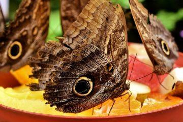 Mangeoire à papillons maison
