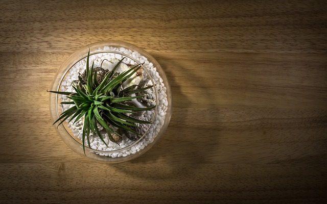 Les meilleures plantes d'aquarium artificiel