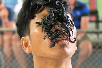 Quel genre de femmes aiment les hommes scorpion ?
