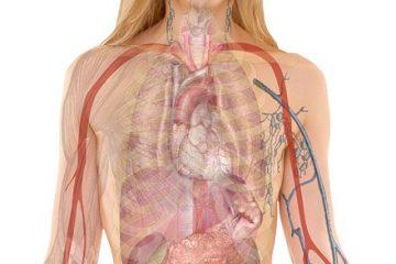 Signes et symptômes du virus de l'estomac