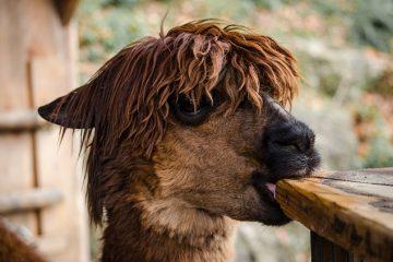 Comment tresser avec de la laine