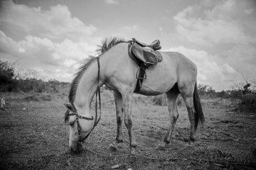 Le cycle de vie d'un cheval
