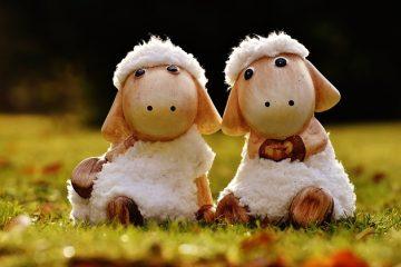 Comment enlever la charpie de la laine