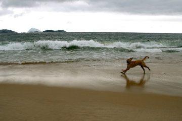 Comment traiter les points chauds d'un chien