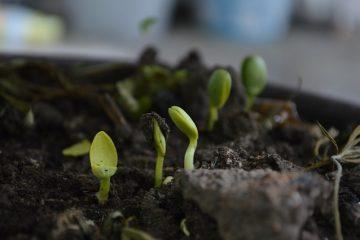 La différence entre le sol et le compost