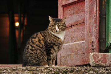 Comment faire en sorte que mon chat cesse de frapper à ma porte ?