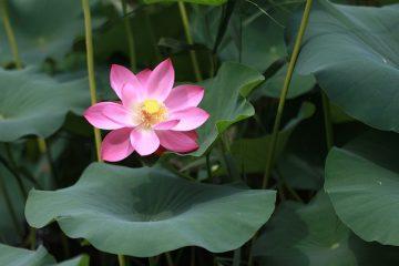 Comment transférer automatiquement mes messages vers un autre compte de messagerie dans les notes de lotus.