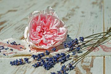 Quels types de roses lavande y a-t-il ?
