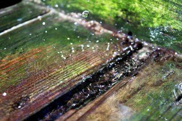 Comment sécher le bois de chauffage au séchoir