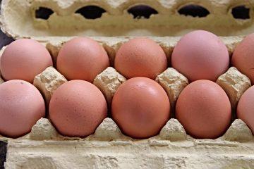 Faits sur le recyclage des cartons d'œufs en carton