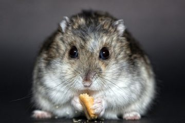 Comment fabriquer un parc à hamster