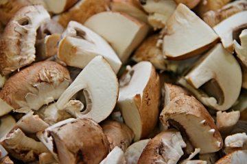 Comment cultiver des champignons dans un grand contenant ou une poubelle