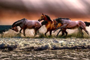 La cécité nocturne chez les chevaux
