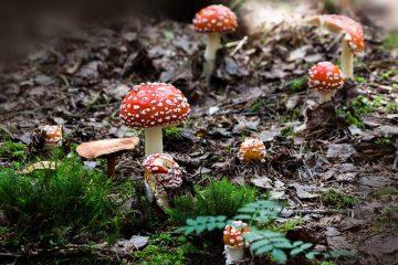 Comment faire cultiver un lit de champignons