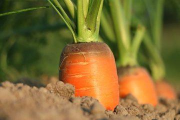 Les meilleures vitamines pour la croissance en hauteur