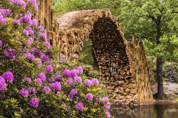 Plantation de rhododendrons soins