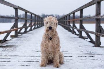 Décongestionnants nasaux qui sont sans danger pour les chiens