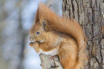 Problèmes d'arbres de chêne vivants