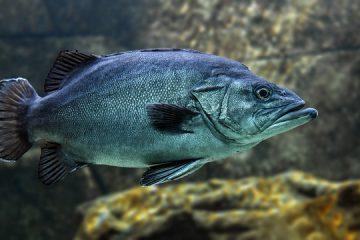 Avantages et inconvénients de la pisciculture