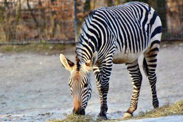 Comment réaliser un projet Zebra en 3D