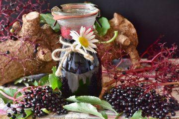 Redbush thé bienfaits pour la santé