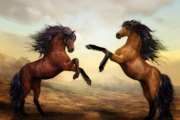 Types de copeaux de bois à ne pas utiliser pour les chevaux