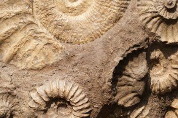 Comment identifier les fossiles de coquillages
