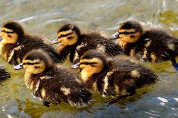 Comment prendre soin des bébés oiseaux sauvages