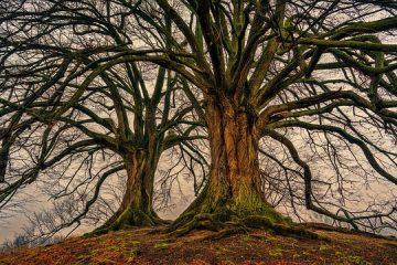 Problèmes des arbres de Katsura