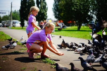 Alimentation de l'hirondelle rustique orpheline