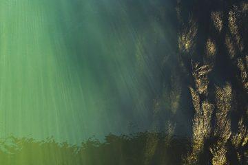 De quoi les algues marines ont-elles besoin pour vivre ?