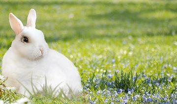 Les animaux qui font leurs propres refuges