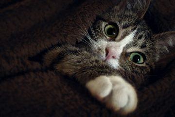 Comment choisir un tapis à l'épreuve des animaux de compagnie