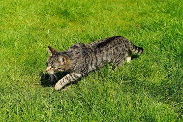 Comment coudre un arrêt de porte pour chats
