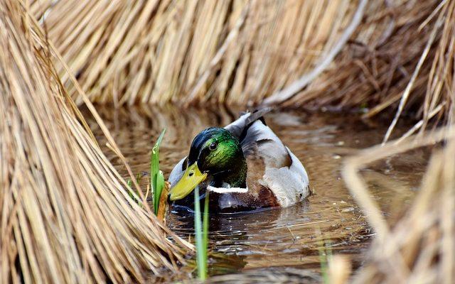 Comment tuer les algues de piscine avec de l'eau de Javel